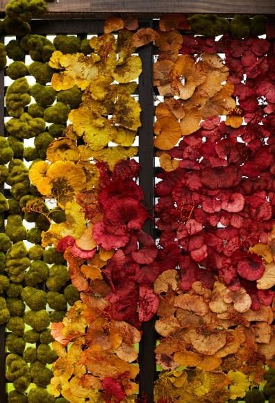 kolorowe kwiaty w hotelu arłamów